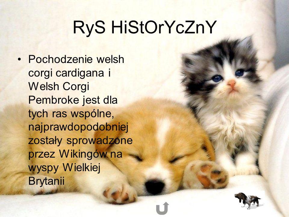 RyS HiStOrYcZnY Pochodzenie welsh corgi cardigana i Welsh Corgi Pembroke jest dla tych ras wspólne, najprawdopodobniej zostały sprowadzone przez Wikingów na wyspy Wielkiej Brytanii