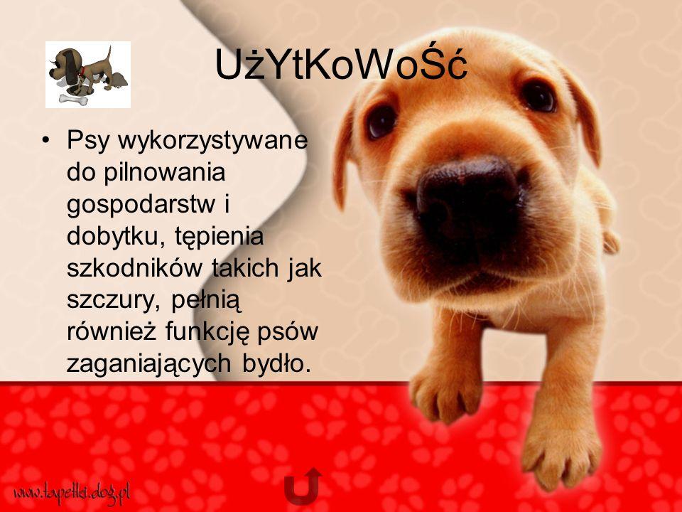 UżYtKoWoŚć Psy wykorzystywane do pilnowania gospodarstw i dobytku, tępienia szkodników takich jak szczury, pełnią również funkcję psów zaganiających bydło.