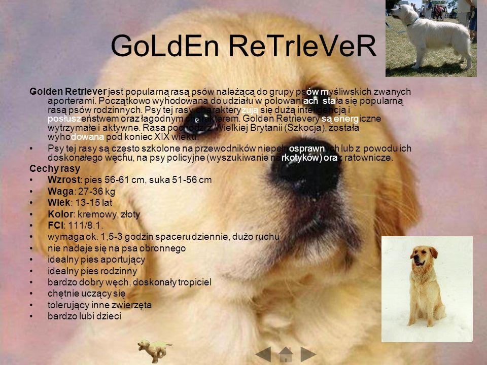 GoLdEn ReTrIeVeR Golden Retriever jest popularną rasą psów należącą do grupy psów myśliwskich zwanych aporterami.