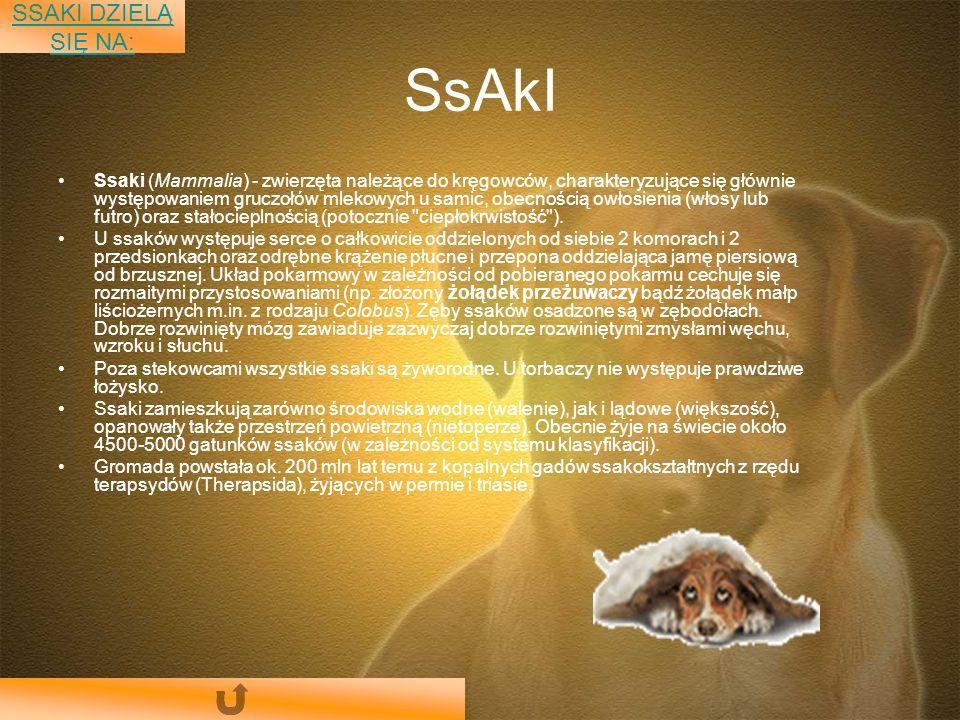 SsAkI Ssaki (Mammalia) - zwierzęta należące do kręgowców, charakteryzujące się głównie występowaniem gruczołów mlekowych u samic, obecnością owłosienia (włosy lub futro) oraz stałocieplnością (potocznie ciepłokrwistość ).