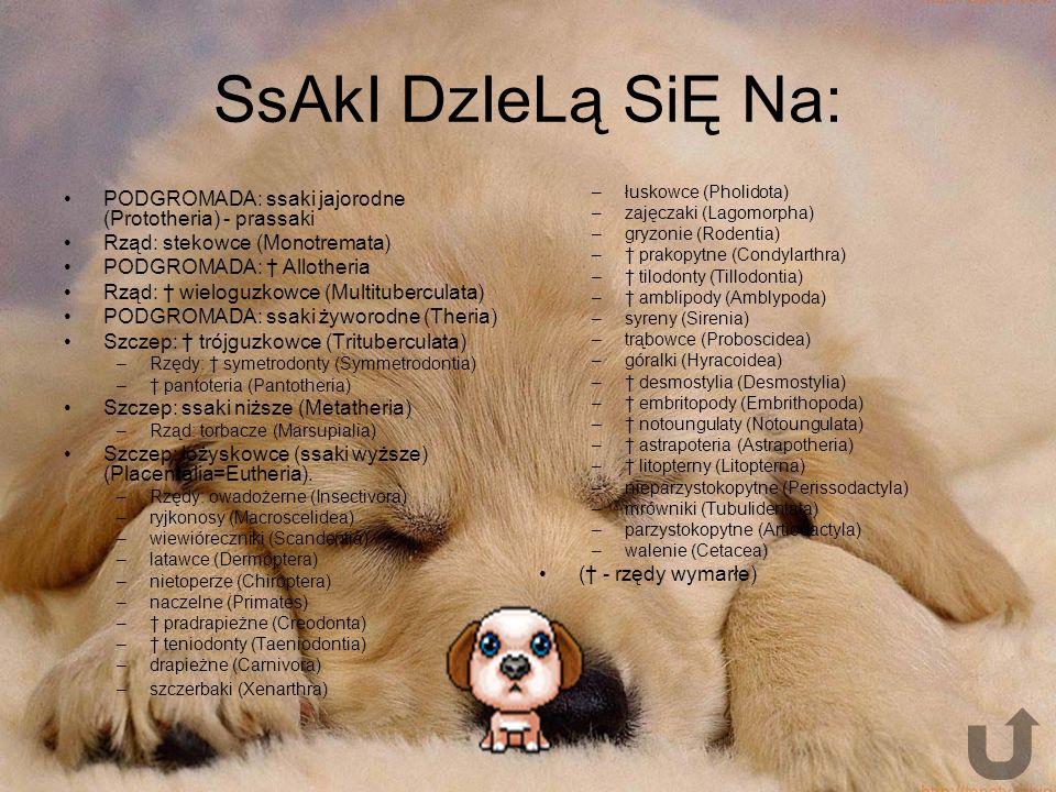 RaSy PsÓw Rasy psów - podział zwierząt z gatunku pies domowy z punktu widzenia ich użyteczności, wielkości, pokrewieństwa genetycznego itp.