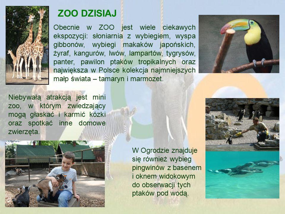 ZOO DZISIAJ Obecnie w ZOO jest wiele ciekawych ekspozycji: słoniarnia z wybiegiem, wyspa gibbonów, wybiegi makaków japońskich, żyraf, kangurów, lwów, lampartów, tygrysów, panter, pawilon ptaków tropikalnych oraz największa w Polsce kolekcja najmniejszych małp świata – tamaryn i marmozet.