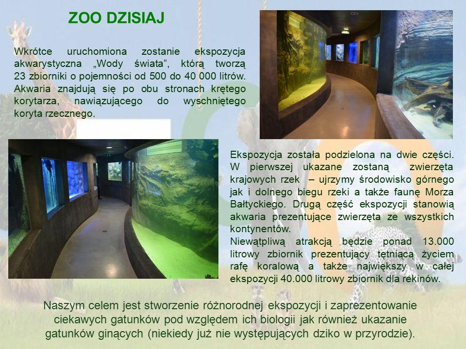 """ZOO DZISIAJ Wkrótce uruchomiona zostanie ekspozycja akwarystyczna """"Wody świata , którą tworzą 23 zbiorniki o pojemności od 500 do 40 000 litrów."""