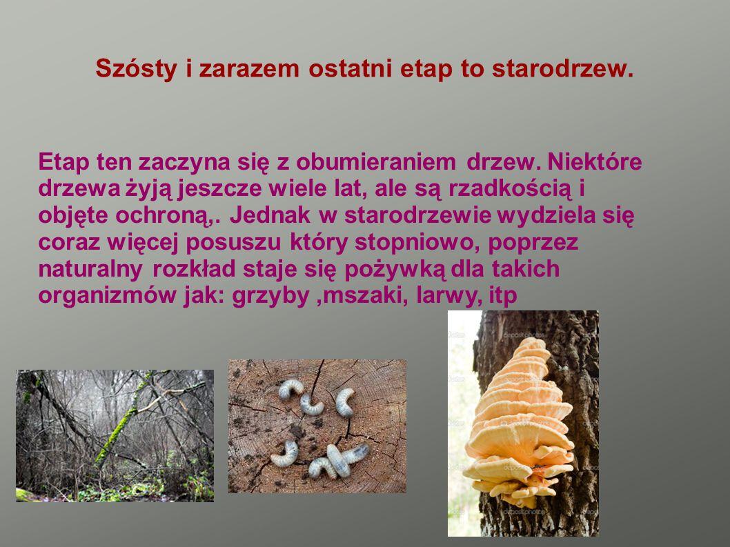 GADY W Puszczy Noteckiej występuje kilka gatunków gadów, wszystkie są objęte ochroną gatunkową.