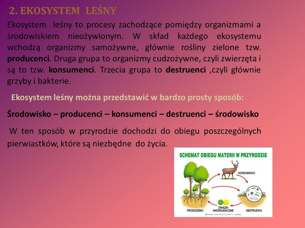 3.ŻYWICA NATURALNA Głównym producentem i źródłem żywicy naturalnej są lasy.
