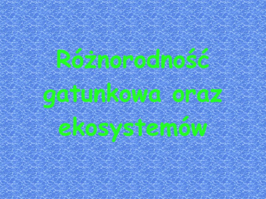 Jesion Jesion – rodzaj roślin z rodziny oliwkowatych, który obejmuje ok.