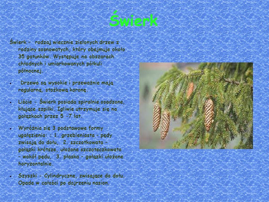 Świerk Świerk – rodzaj wiecznie zielonych drzew z rodziny sosnowatych, który obejmuje około 35 gatunków.