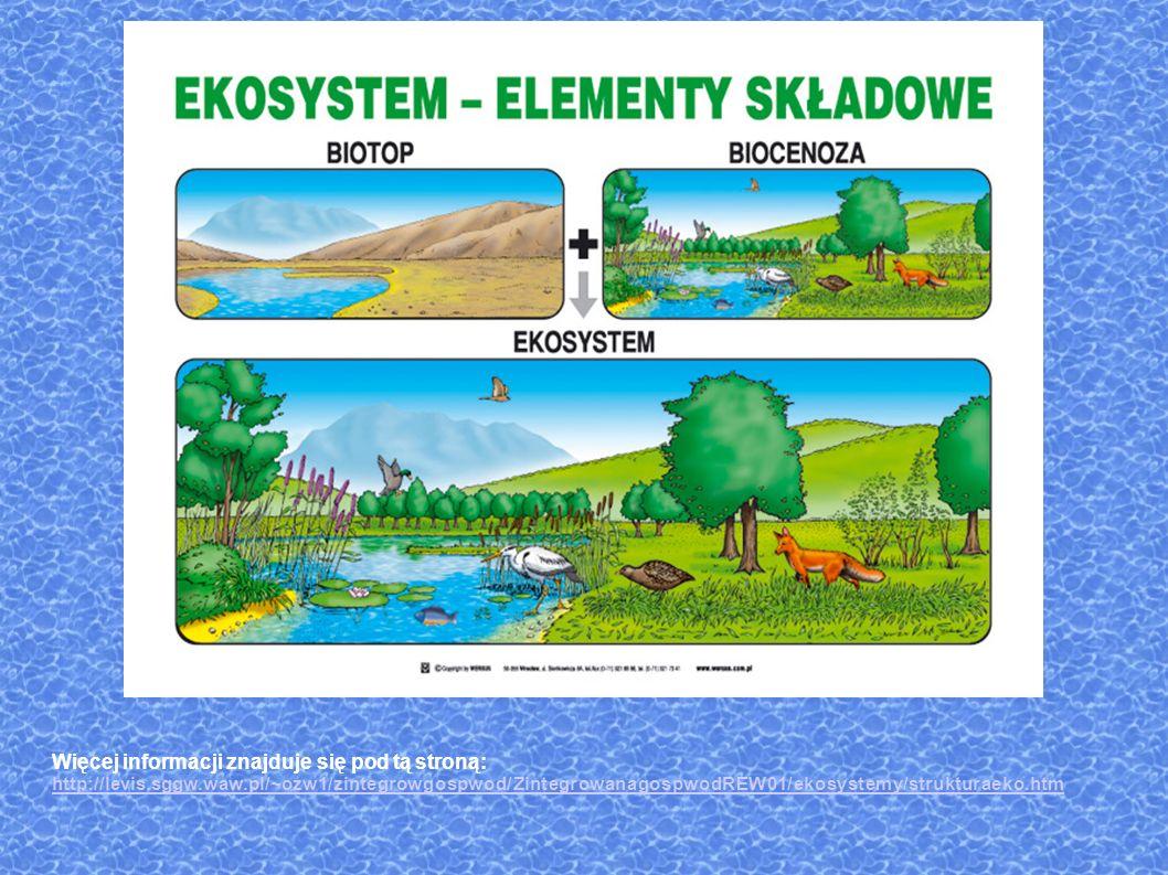 Więcej informacji znajduje się pod tą stroną: http://levis.sggw.waw.pl/~ozw1/zintegrowgospwod/ZintegrowanagospwodREW01/ekosystemy/strukturaeko.htm http://levis.sggw.waw.pl/~ozw1/zintegrowgospwod/ZintegrowanagospwodREW01/ekosystemy/strukturaeko.htm