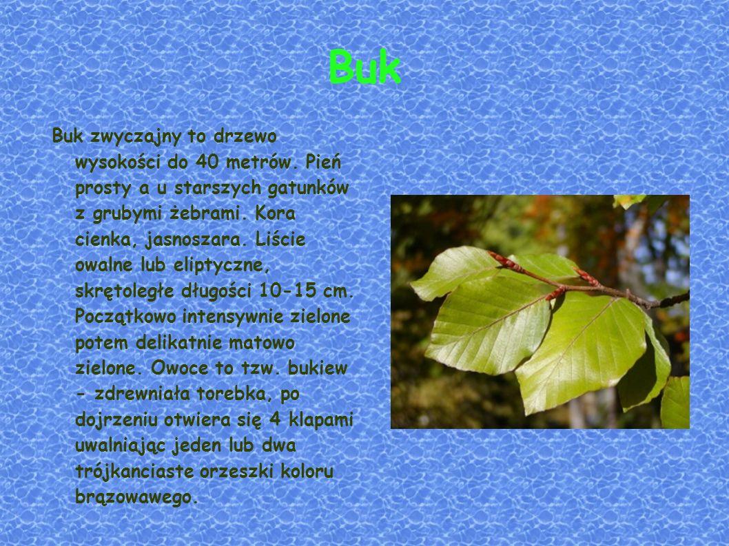 2. Ekosystem