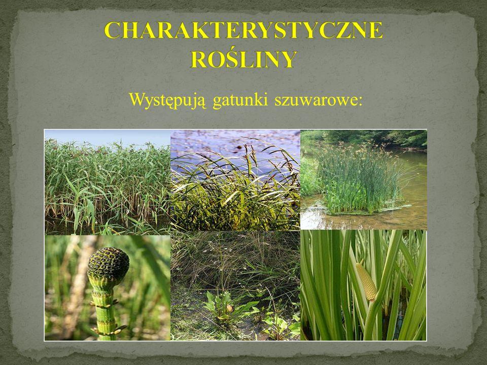 Miejsca będące pod wodą, są odpowiednie dla rozwoju łąk, zarośli i łęgów.