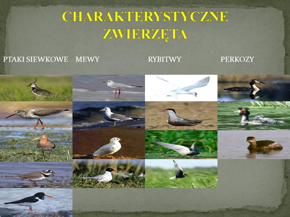 Nadwarciańskie rozlewiska mają znaczenie dla ptaków wędrownych, zimujących, lęgowych oraz przechodzących pierzenie.