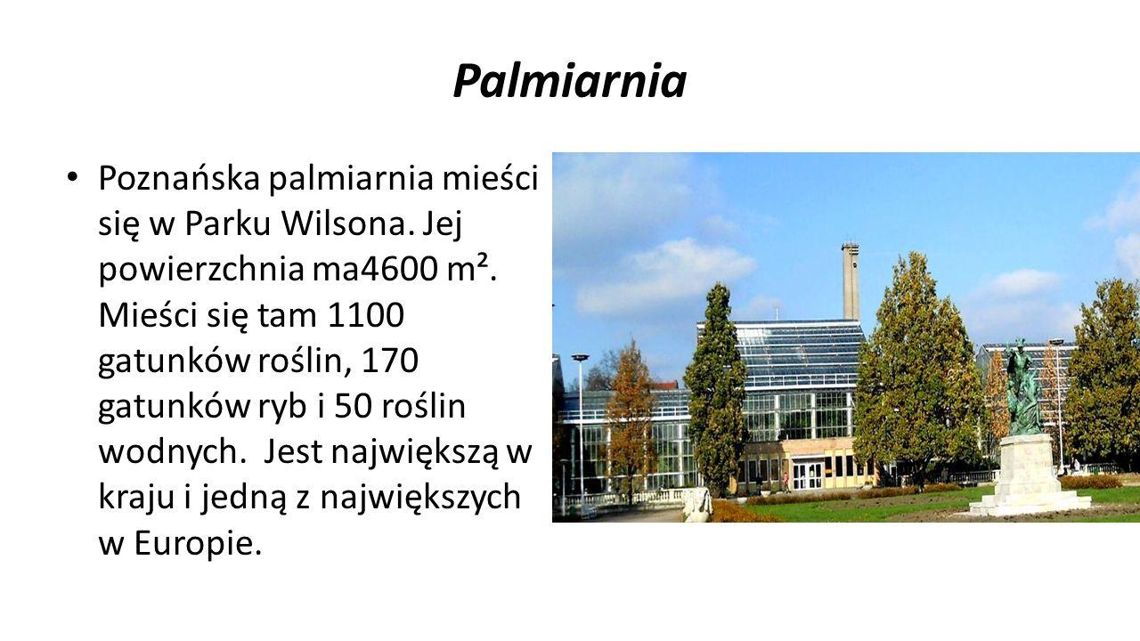 Palmiarnia Poznańska palmiarnia mieści się w Parku Wilsona. Jej powierzchnia ma4600 m². Mieści się tam 1100 gatunków roślin, 170 gatunków ryb i 50 roś