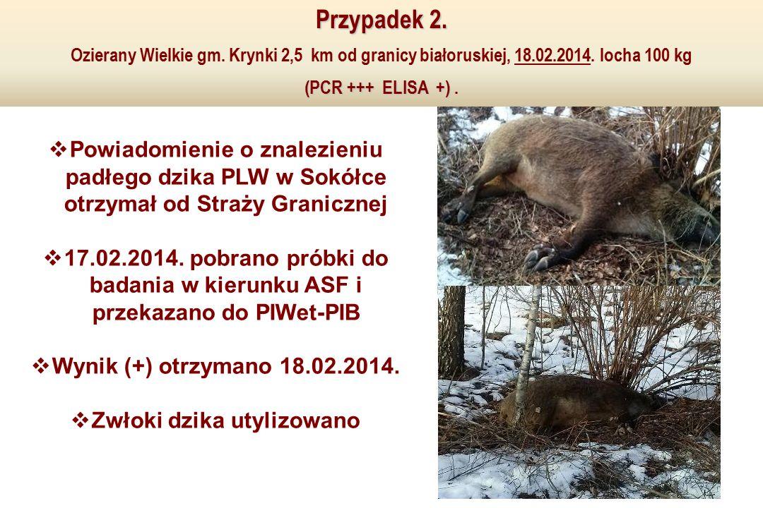  Powiadomienie o znalezieniu padłego dzika PLW w Sokółce otrzymał od Straży Granicznej  17.02.2014.