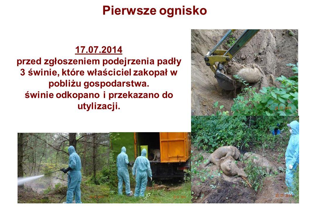 17.07.2014 przed zgłoszeniem podejrzenia padły 3 świnie, które właściciel zakopał w pobliżu gospodarstwa.
