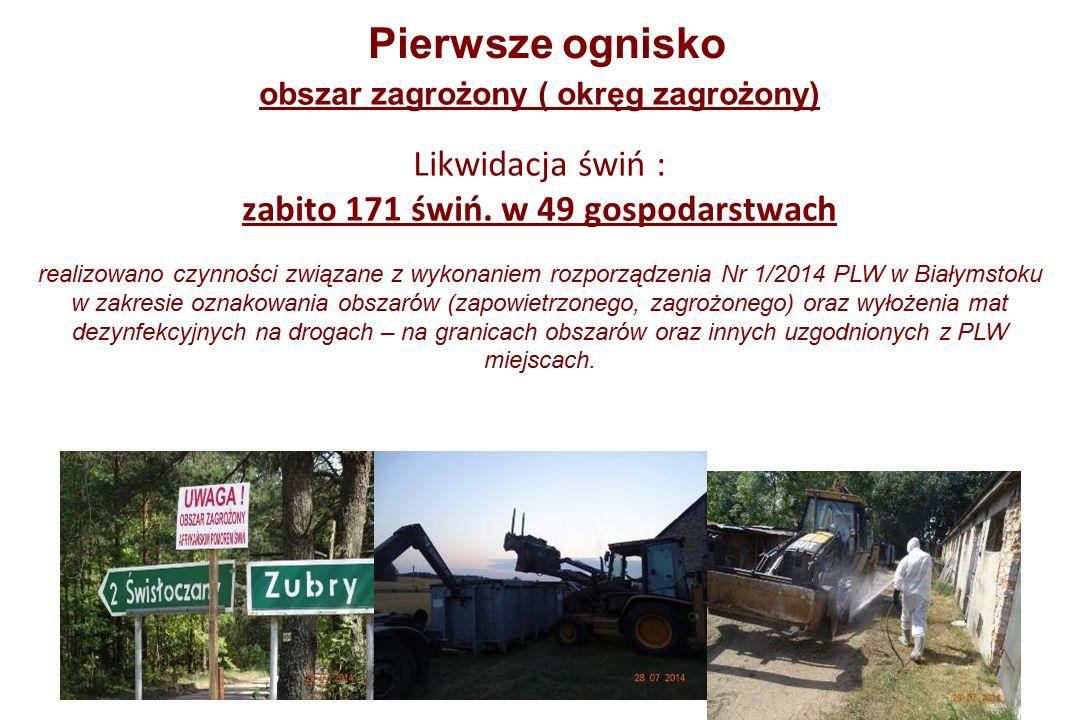 Pierwsze ognisko obszar zagrożony ( okręg zagrożony) Likwidacja świń : zabito 171 świń.