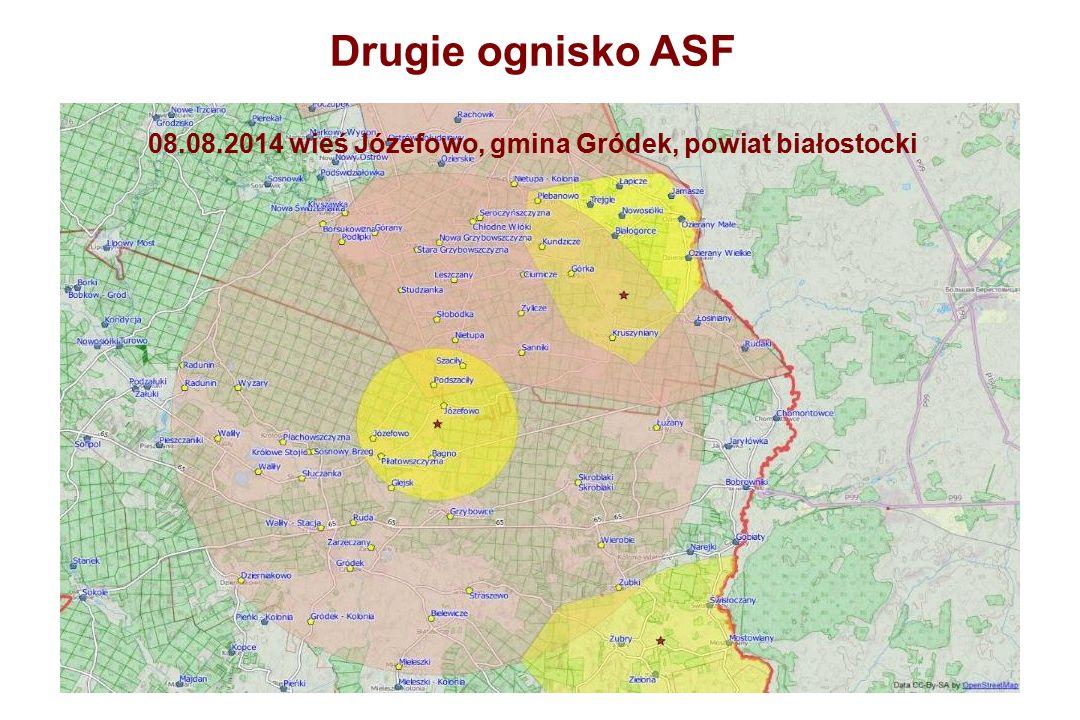 Drugie ognisko ASF 08.08.2014 wieś Józefowo, gmina Gródek, powiat białostocki