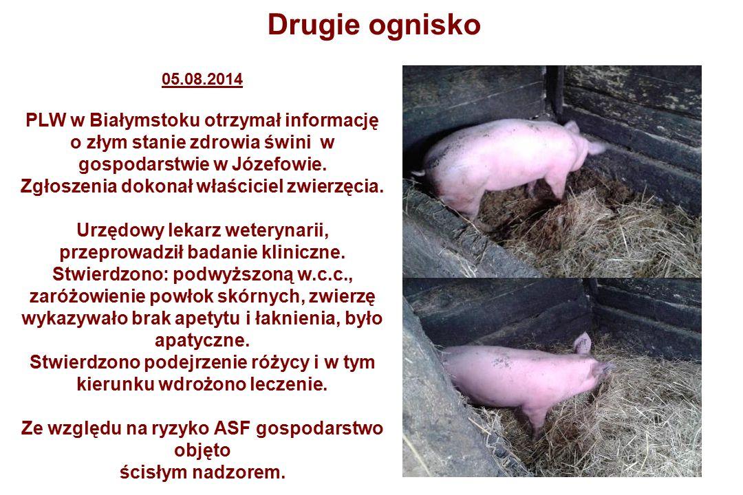 05.08.2014 PLW w Białymstoku otrzymał informację o złym stanie zdrowia świni w gospodarstwie w Józefowie.