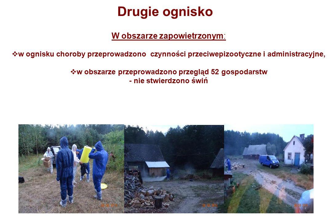 W obszarze zapowietrzonym:  w ognisku choroby przeprowadzono czynności przeciwepizootyczne i administracyjne,  w obszarze przeprowadzono przegląd 52 gospodarstw - nie stwierdzono świń