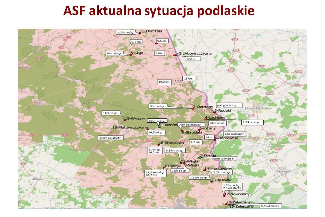 ASF aktualna sytuacja podlaskie