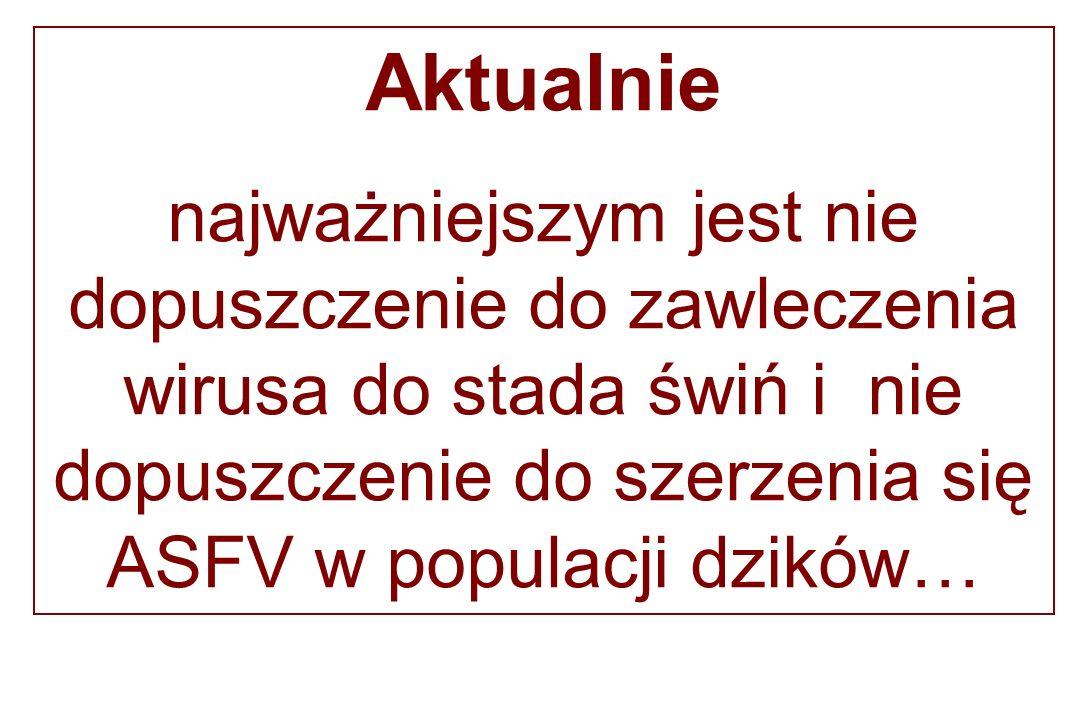 Aktualnie najważniejszym jest nie dopuszczenie do zawleczenia wirusa do stada świń i nie dopuszczenie do szerzenia się ASFV w populacji dzików…