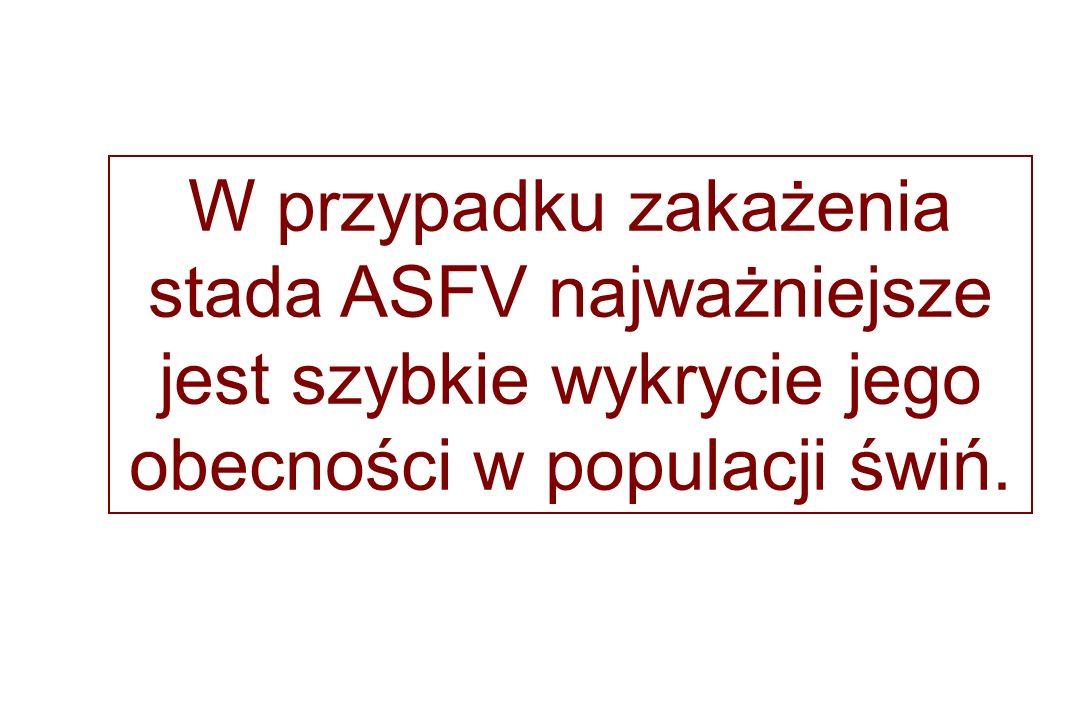 W przypadku zakażenia stada ASFV najważniejsze jest szybkie wykrycie jego obecności w populacji świń.