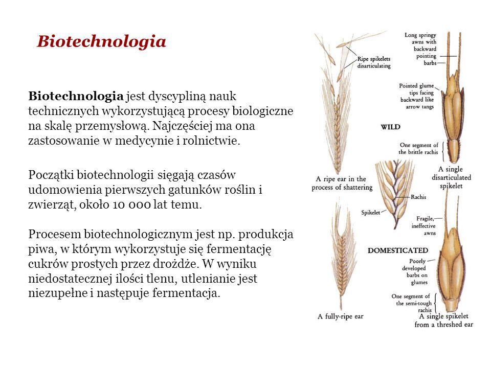 Biotechnologia Biotechnologia jest dyscypliną nauk technicznych wykorzystującą procesy biologiczne na skalę przemysłową.