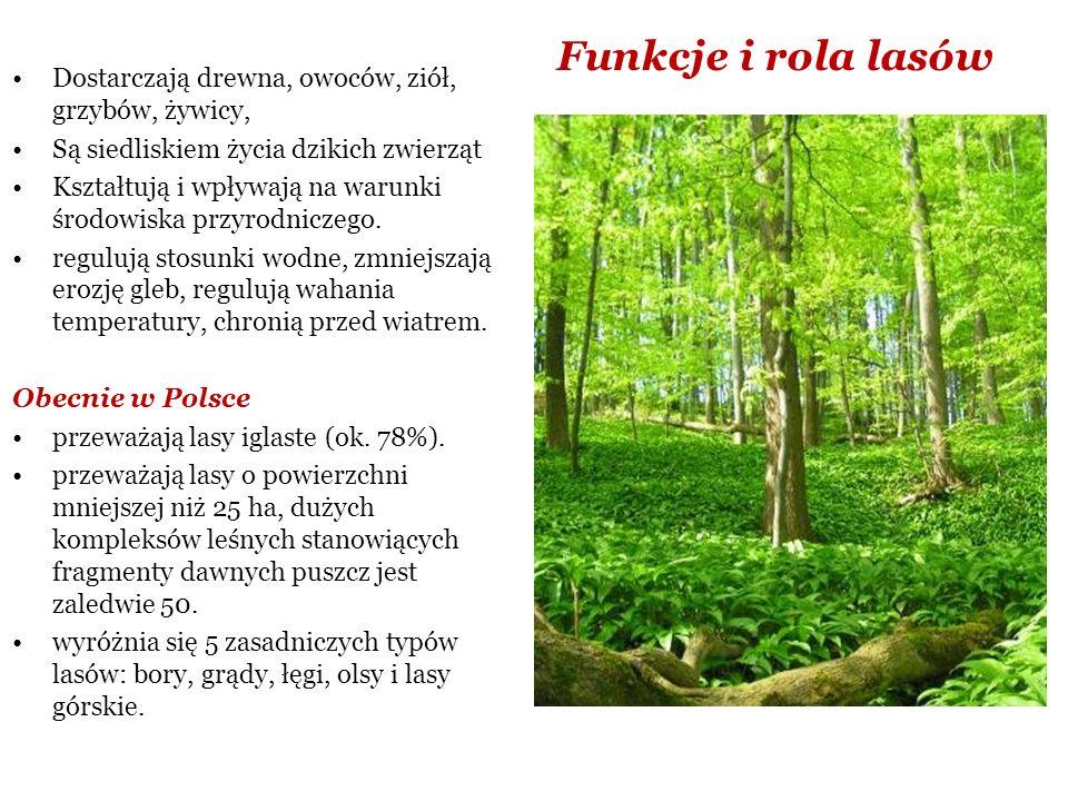 Inne czynniki oddziałujące na środowisko: leśnictwo, rekreacja, turystyka, biotechnologia