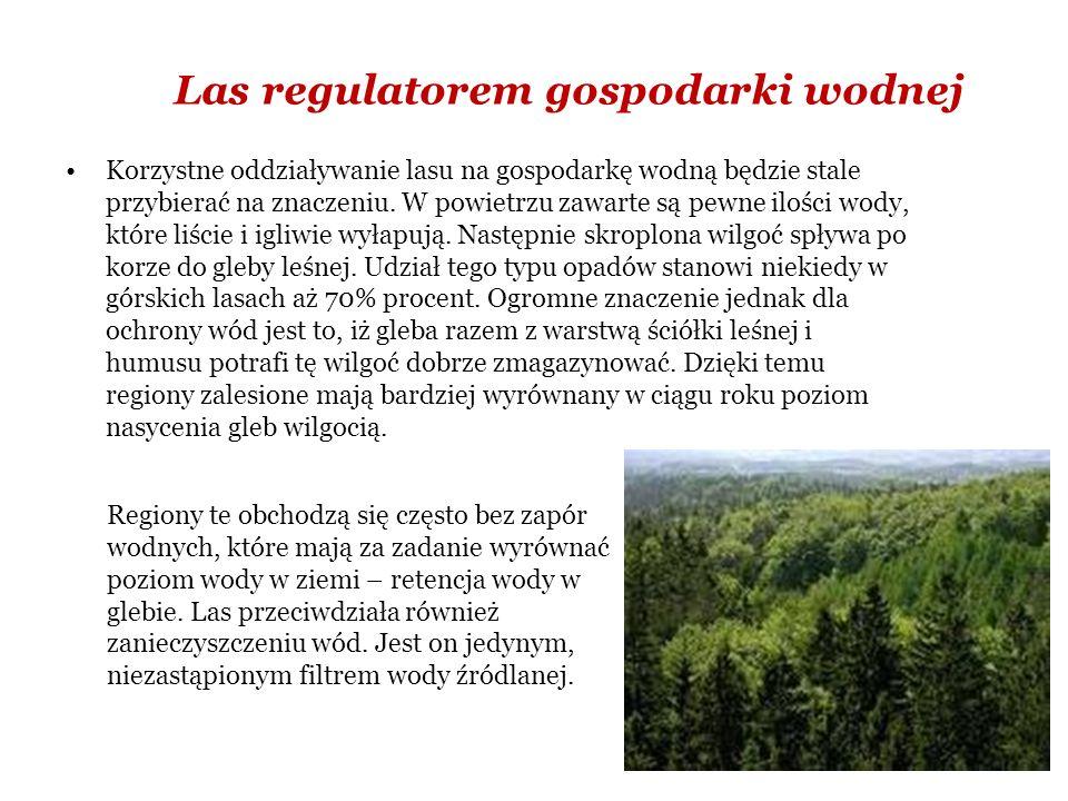 Las regulatorem gospodarki wodnej Korzystne oddziaływanie lasu na gospodarkę wodną będzie stale przybierać na znaczeniu.