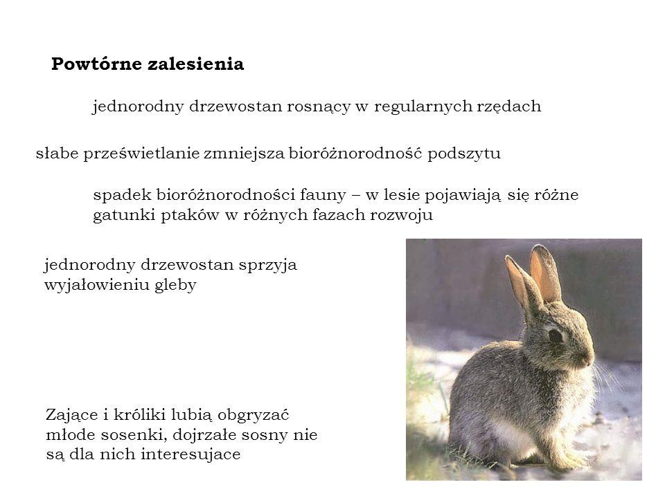 Powtórne zalesienia jednorodny drzewostan rosnący w regularnych rzędach słabe prześwietlanie zmniejsza bioróżnorodność podszytu spadek bioróżnorodności fauny – w lesie pojawiają się różne gatunki ptaków w różnych fazach rozwoju Zające i króliki lubią obgryzać młode sosenki, dojrzałe sosny nie są dla nich interesujace jednorodny drzewostan sprzyja wyjałowieniu gleby