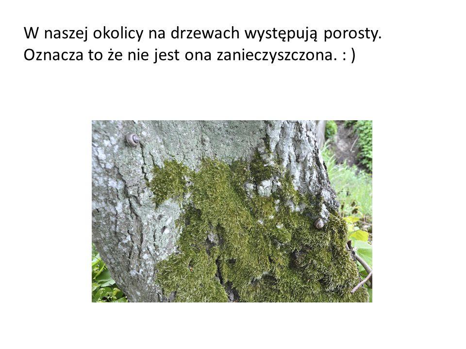 W naszej okolicy na drzewach występują porosty. Oznacza to że nie jest ona zanieczyszczona. : )
