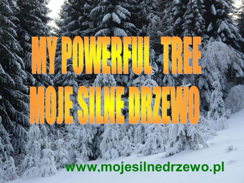 www,mojesilnedrzewo.pl