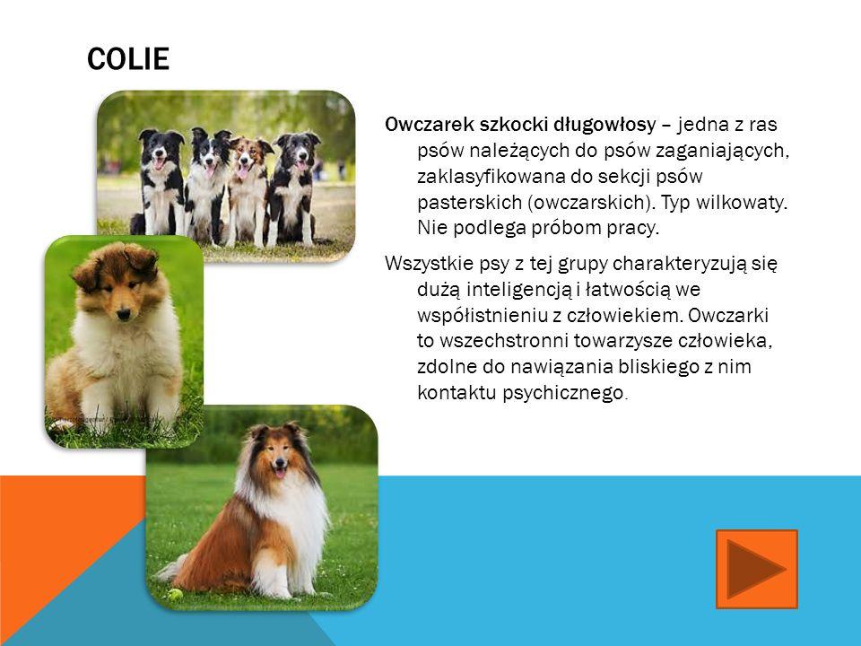 HUSKY SYBERYJSKI Husky syberyjski – jedna z ras psów, należąca do grupy, zaklasyfikowana do sekcji północnych psów zaprzęgowych. Zgodnie z klasyfikacj