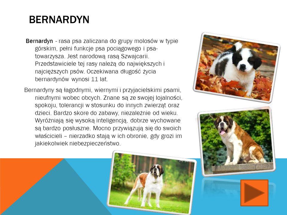COLIE Owczarek szkocki długowłosy – jedna z ras psów należących do psów zaganiających, zaklasyfikowana do sekcji psów pasterskich (owczarskich). Typ w