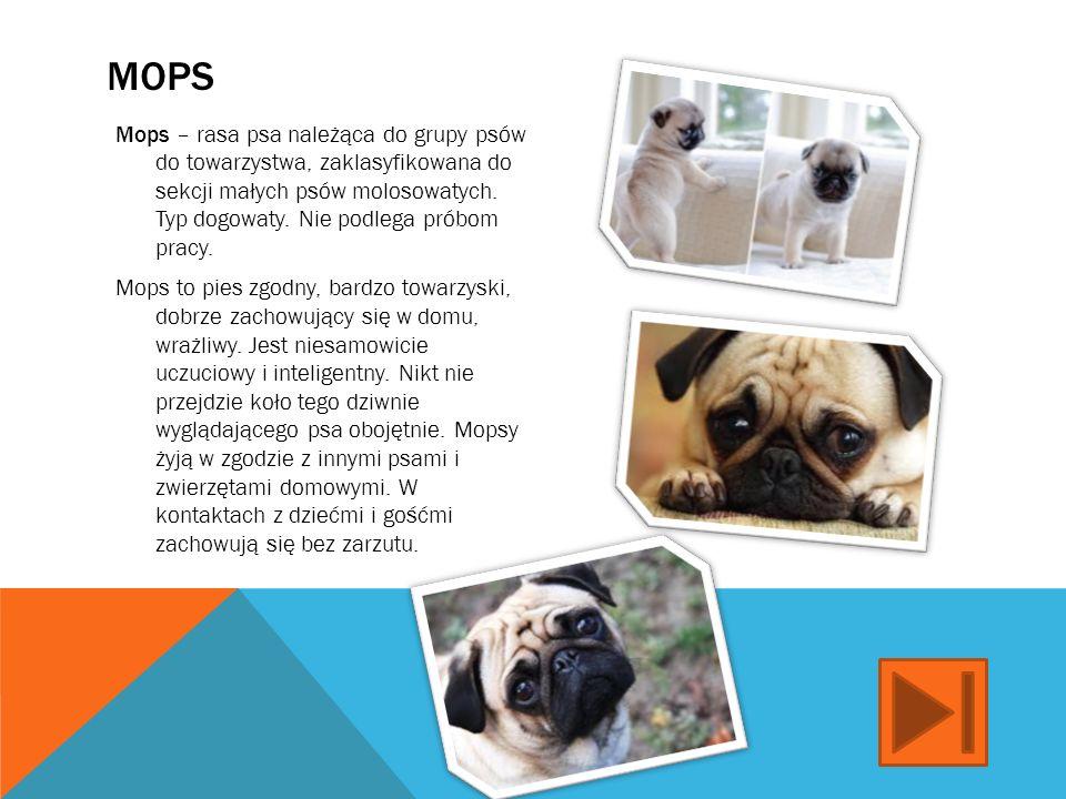DOBERMAN Doberman – rasa psa zaliczana do grupy pinczerów. Krajem pochodzenia tej rasy są Niemcy. Psy tej rasy celem uzyskania kwalifikacji hodowlanyc