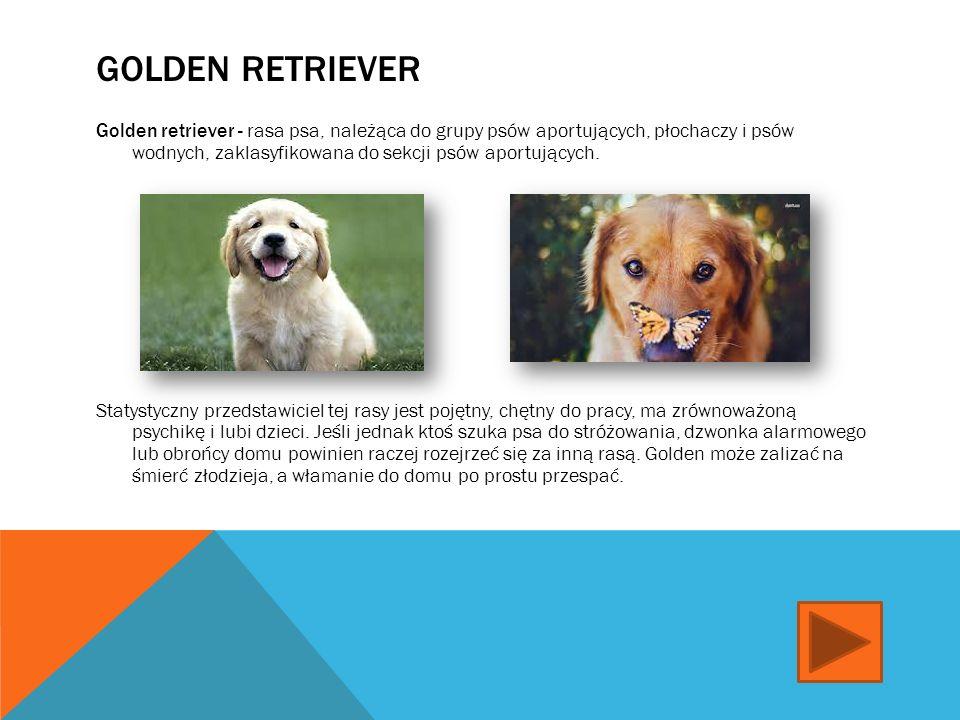 OWCZAREK NIEMIECKI Owczarek niemiecki - jedna z ras psów należąca do grupy psów pasterskich (owczarskich).