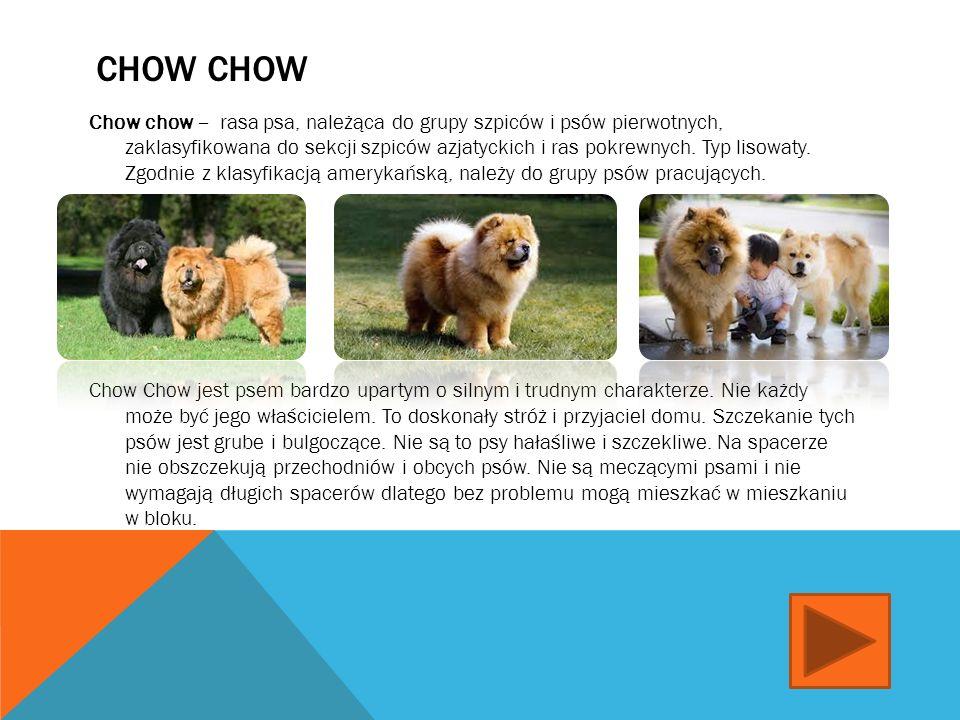 BEAGLE Beagle - rasa psa, należąca do grupy psów gończych, posokowców i psów ras pokrewnych, typu wyżłowatego.