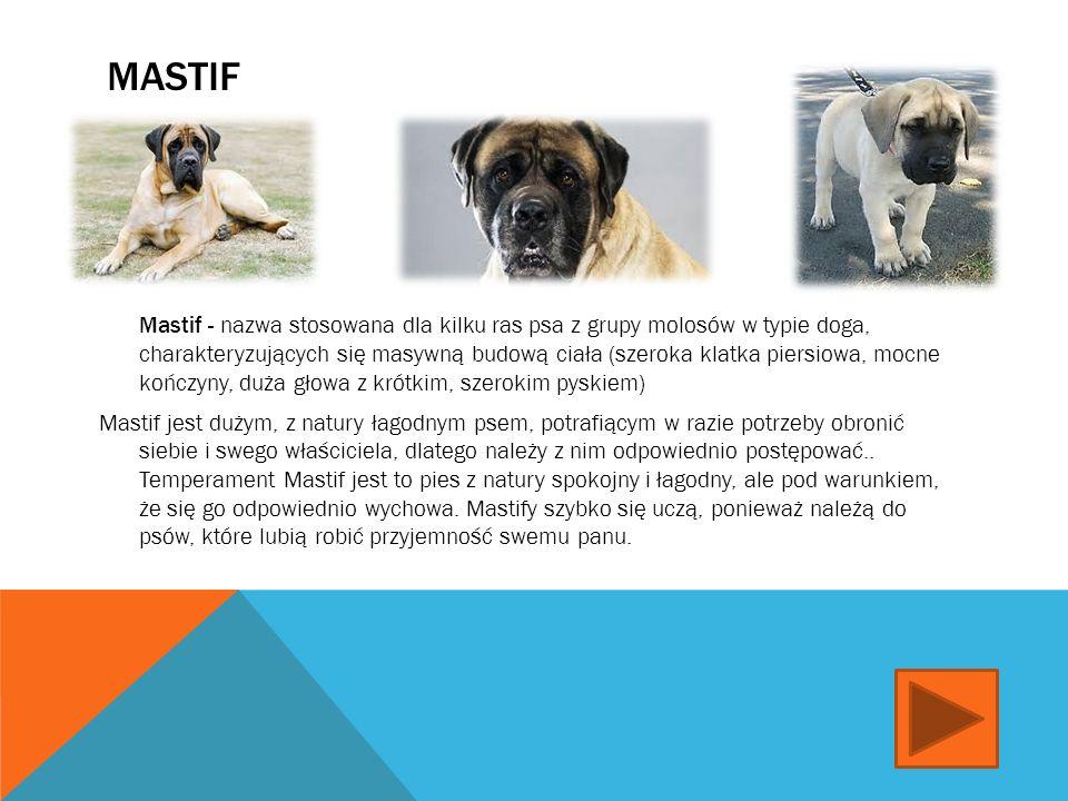 ALASKAN MALAMUTE Alaskan malamute - rasa psa zaprzęgowego w typie szpica, zaliczana do ras pierwotnych.