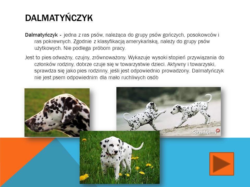 MASTIF Mastif - nazwa stosowana dla kilku ras psa z grupy molosów w typie doga, charakteryzujących się masywną budową ciała (szeroka klatka piersiowa, mocne kończyny, duża głowa z krótkim, szerokim pyskiem) Mastif jest dużym, z natury łagodnym psem, potrafiącym w razie potrzeby obronić siebie i swego właściciela, dlatego należy z nim odpowiednio postępować..