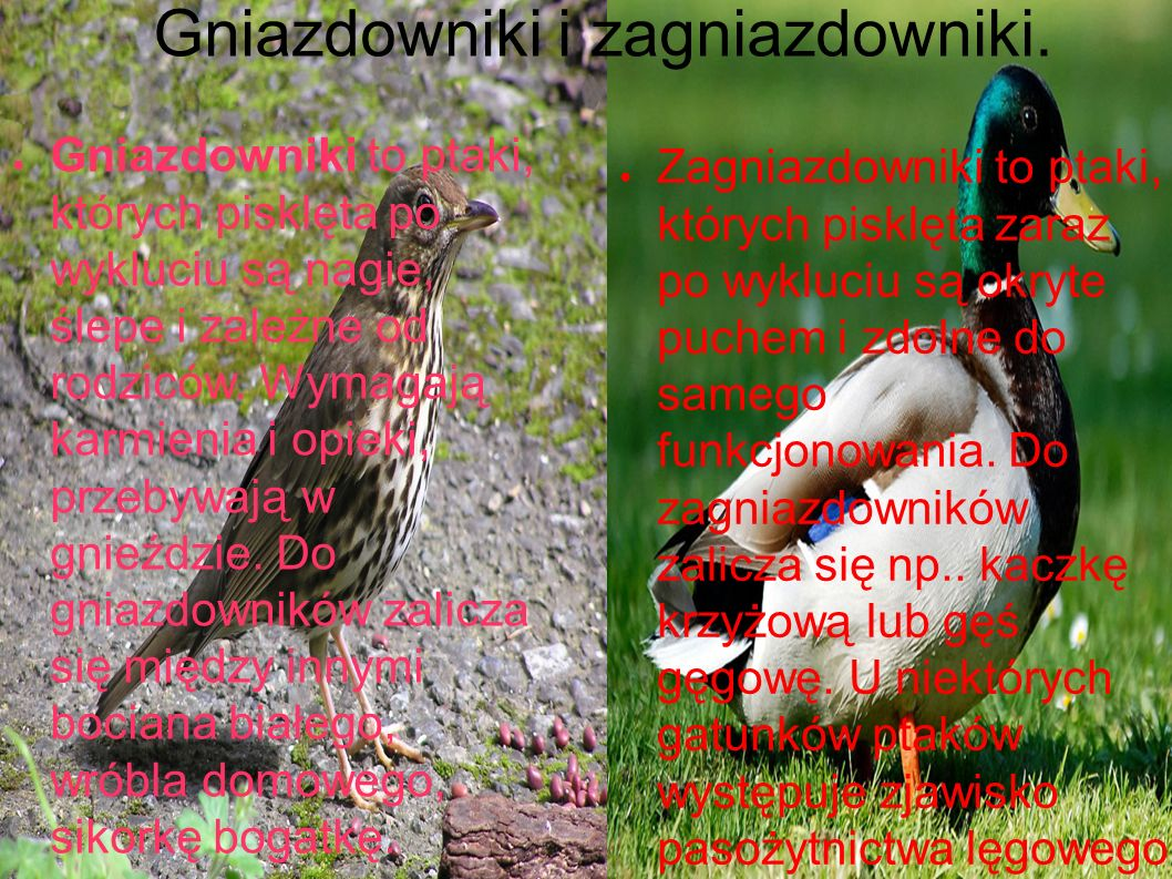 Gniazdowniki i zagniazdowniki.