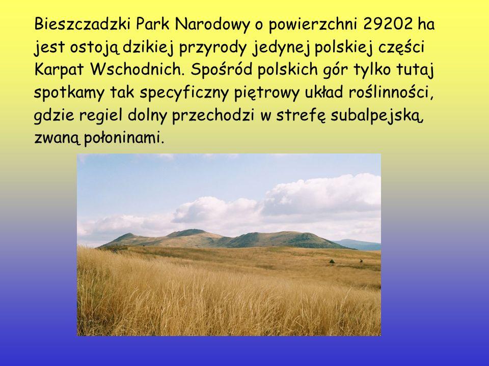 Bieszczadzki Park Narodowy o powierzchni 29202 ha jest ostoją dzikiej przyrody jedynej polskiej części Karpat Wschodnich. Spośród polskich gór tylko t