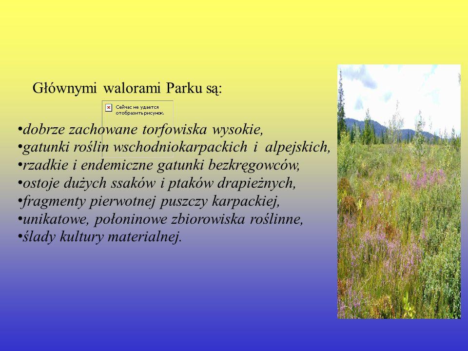 Głównymi walorami Parku są: dobrze zachowane torfowiska wysokie, gatunki roślin wschodniokarpackich i alpejskich, rzadkie i endemiczne gatunki bezkręg