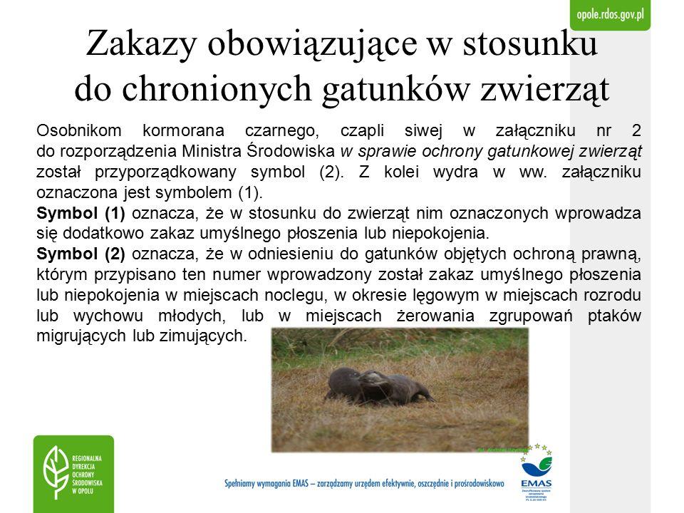 Zakazy obowiązujące w stosunku do chronionych gatunków zwierząt Zakaz umyślnego płoszenia lub niepokojenia w miejscach noclegu, w okresie lęgowym w miejscach rozrodu lub wychowu młodych, lub w miejscach żerowania zgrupowań ptaków migrujących lub zimujących, w zakresie dotyczącym dotyczącym miejsc żerowania zgrupowań ptaków migrujących lub żerujących nie dotyczy czapli siwej i kormorana czarnego w obrębach hodowlanych ustanowionych zgodnie z przepisami o rybactwie śródlądowym (§ 6 ust.