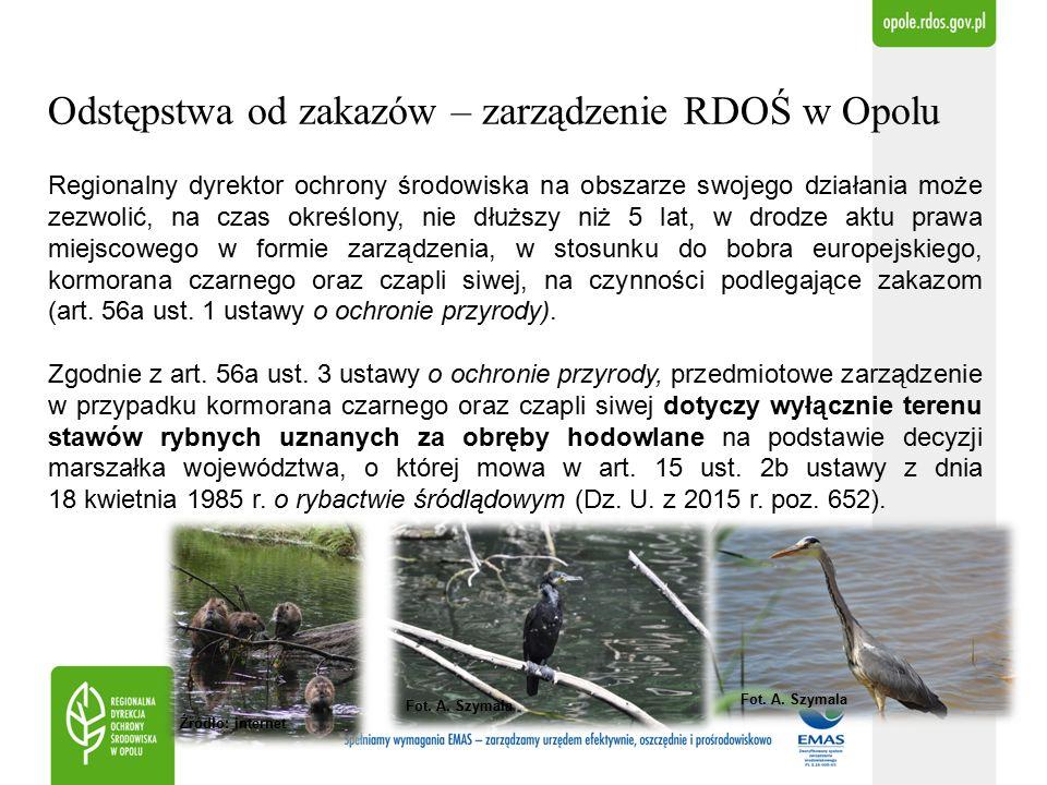 Odstępstwa od zakazów – zarządzenie RDOŚ w Opolu Zarządzenie zezwalające na wykonanie czynności zakazanych w odniesieniu do osobników bobra europejskiego, kormorana czarnego i czapli siwej może być wydane w przypadku zaistnienia łącznie 3 warunków: 1.braku rozwiązań alternatywnych, 2.jeżeli czynności, których dotyczy zarządzenie, nie są szkodliwe dla zachowania we właściwym stanie ochrony dziko występujących populacji gatunków objętych zarządzeniem, oraz 3.czynności objęte zarządzeniem leżą w interesie zdrowia lub bezpieczeństwa powszechnego lub: a.w przypadku kormorana czarnego oraz czapli siwej - wynika to z konieczności ograniczenia poważnych szkód w odniesieniu do lasów, rybostanu lub wody, b.