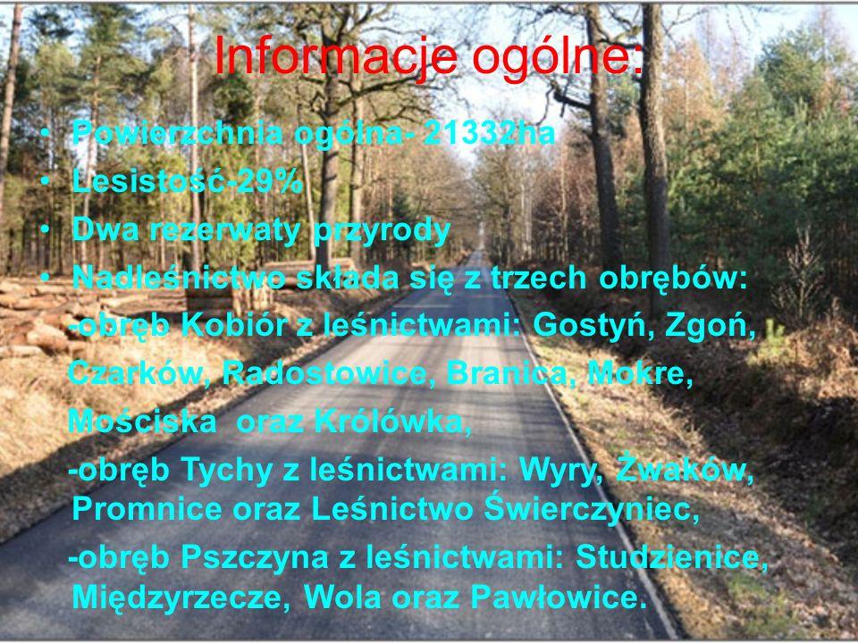 Informacje ogólne: Powierzchnia ogólna- 21332ha Lesistość-29% Dwa rezerwaty przyrody Nadleśnictwo składa się z trzech obrębów: -obręb Kobiór z leśnictwami: Gostyń, Zgoń, Czarków, Radostowice, Branica, Mokre, Mościska oraz Królówka, -obręb Tychy z leśnictwami: Wyry, Żwaków, Promnice oraz Leśnictwo Świerczyniec, -obręb Pszczyna z leśnictwami: Studzienice, Międzyrzecze, Wola oraz Pawłowice.