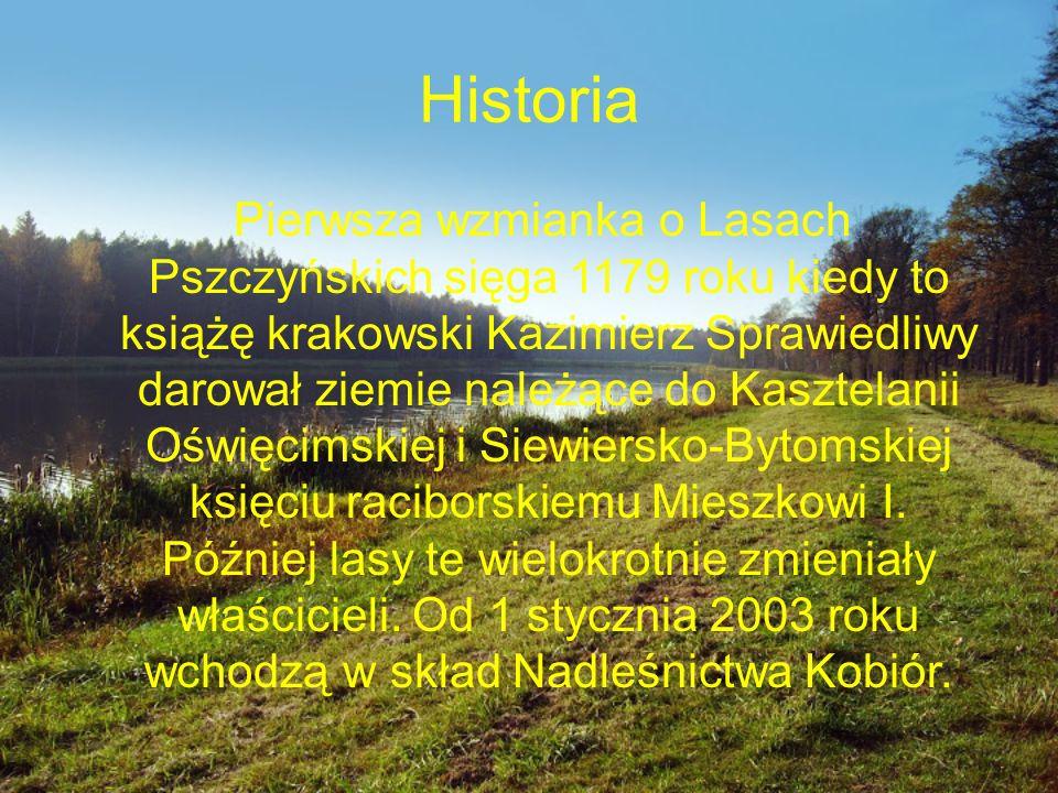 Historia Pierwsza wzmianka o Lasach Pszczyńskich sięga 1179 roku kiedy to książę krakowski Kazimierz Sprawiedliwy darował ziemie należące do Kasztelanii Oświęcimskiej i Siewiersko-Bytomskiej księciu raciborskiemu Mieszkowi I.
