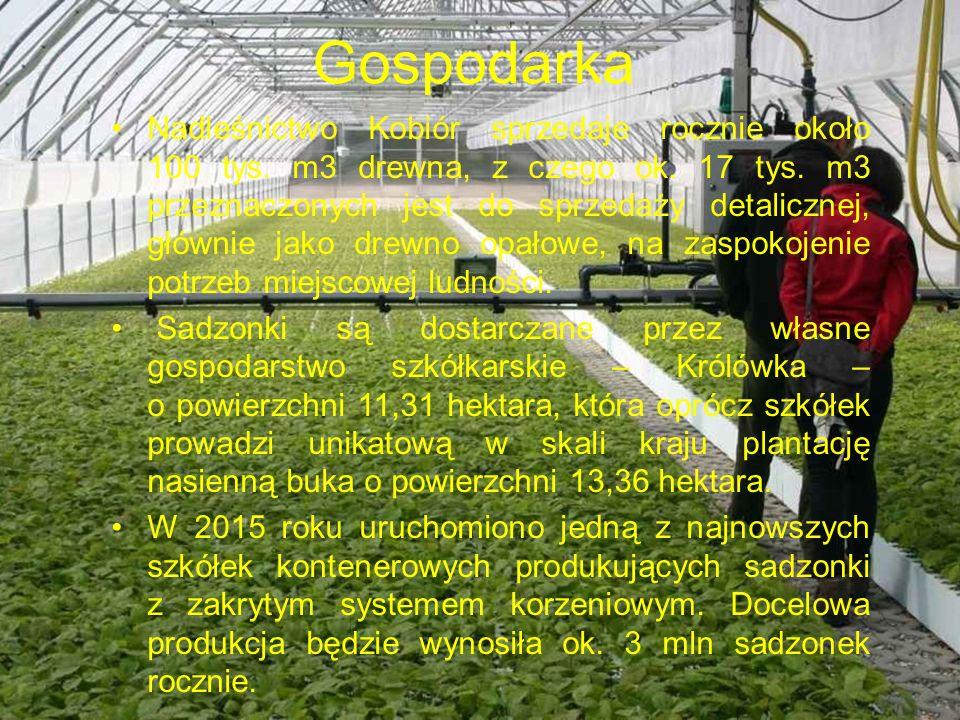 Gospodarka Nadleśnictwo Kobiór sprzedaje rocznie około 100 tys.