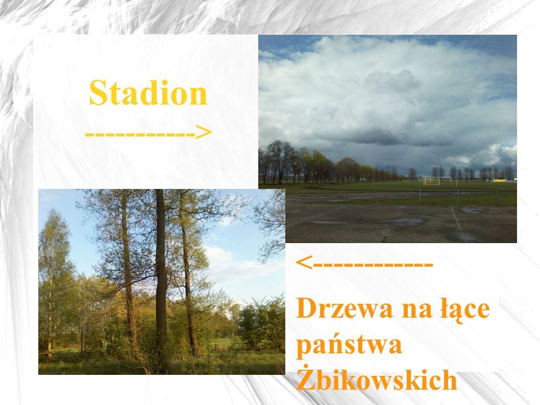 Stadion -----------> <------------ Drzewa na łące państwa Żbikowskich