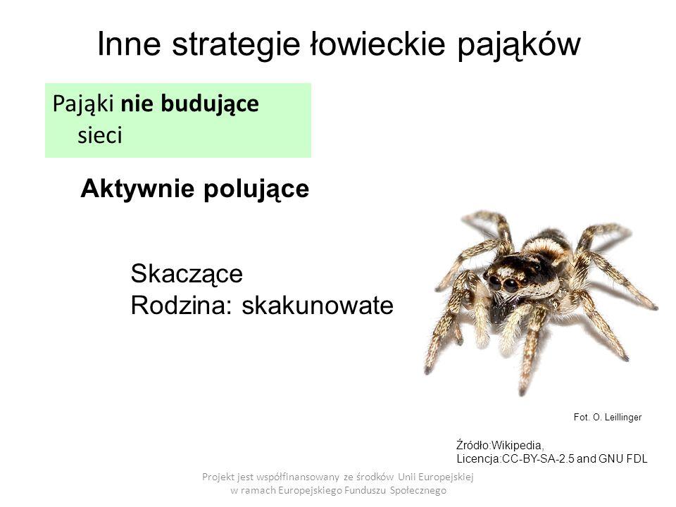 Projekt jest współfinansowany ze środków Unii Europejskiej w ramach Europejskiego Funduszu Społecznego Inne strategie łowieckie pająków Aktywnie polujące Pająki nie budujące sieci Fot.