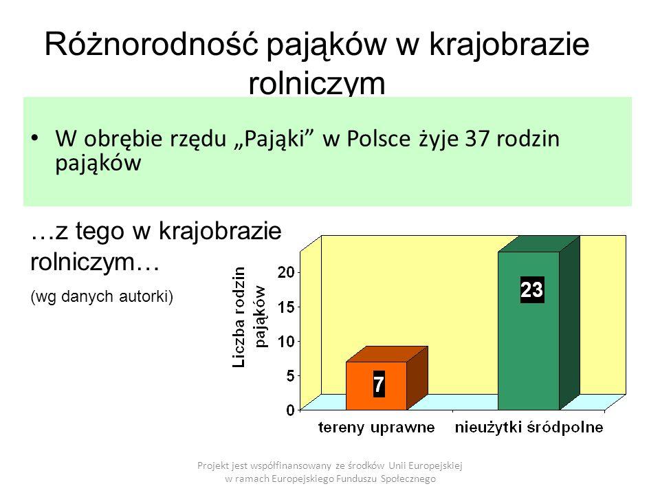 """Różnorodność pająków w krajobrazie rolniczym W obrębie rzędu """"Pająki w Polsce żyje 37 rodzin pająków …z tego w krajobrazie rolniczym… (wg danych autorki)"""