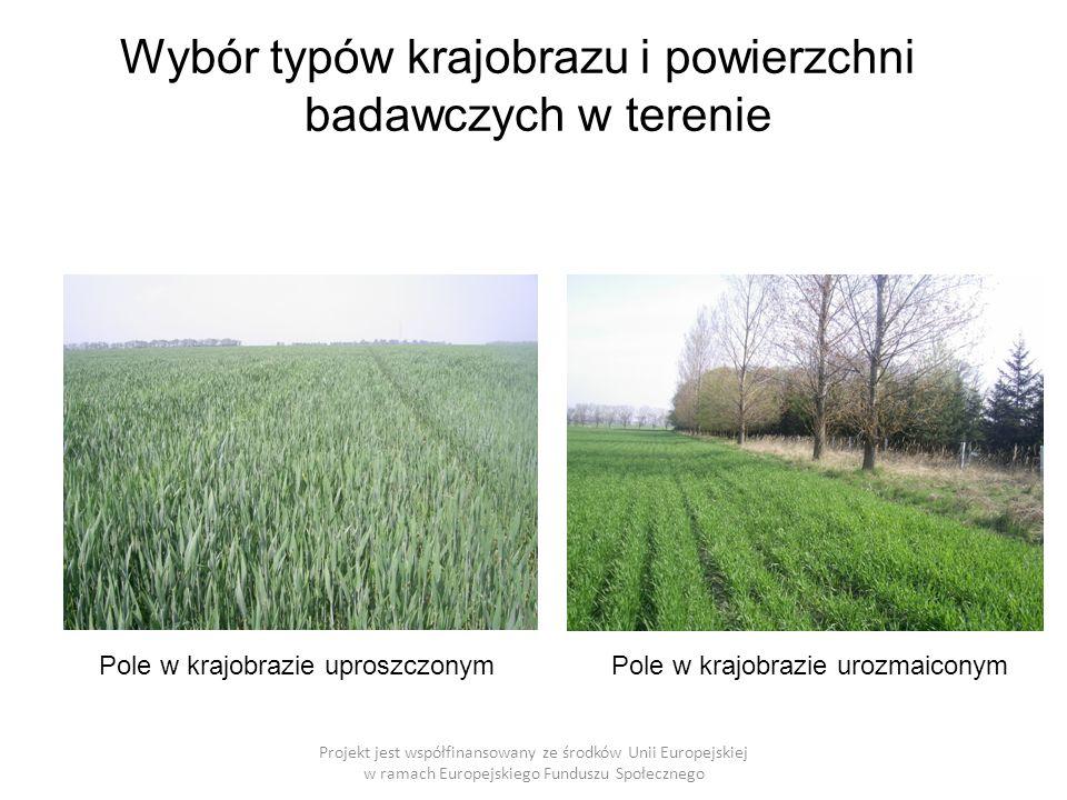 Wybór typów krajobrazu i powierzchni badawczych w terenie Projekt jest współfinansowany ze środków Unii Europejskiej w ramach Europejskiego Funduszu Społecznego Pole w krajobrazie uproszczonymPole w krajobrazie urozmaiconym